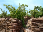 VINS de LIQUEURS et DOUX NATURELS